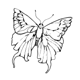 cropped-vector-mariposa-anagrama